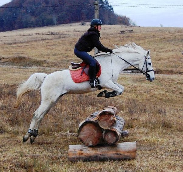 By communicating to your horse you can make them want to have fun with you