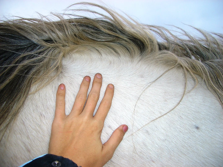By understanding the horse's body language and energy, you can build a special connection.
