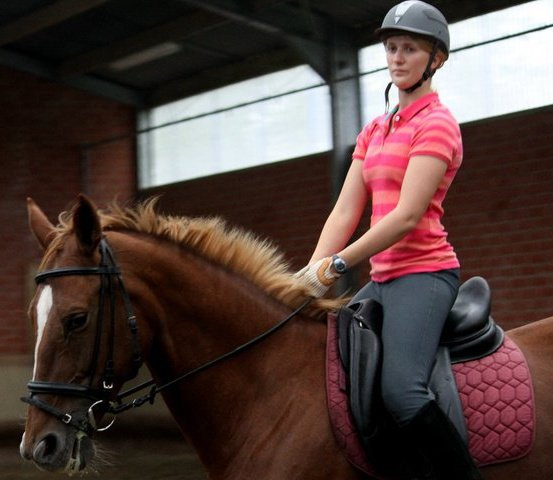 Krystal is riding a warmblood in an Olympic stables in Belgium