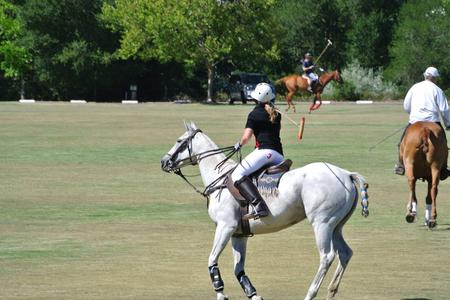 Polo in California
