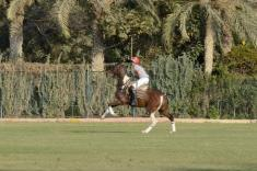 Polo in Cairo